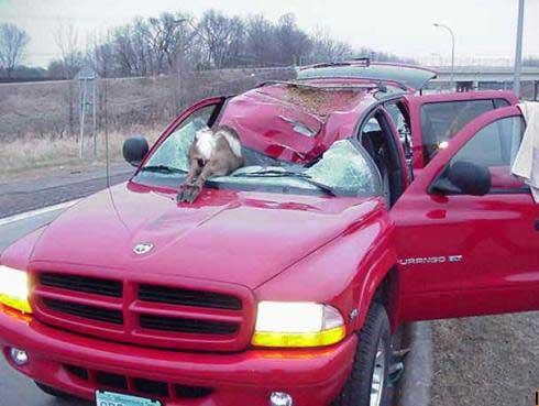 Car Funny pictures, Jokes & crash photos # 191
