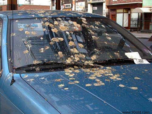 Car Funny pictures, Jokes & crash photos # 8