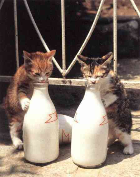 Funny Cat pictures & photos # 172
