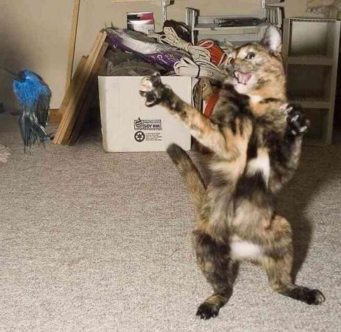 Funny Cat pictures & photos # 178