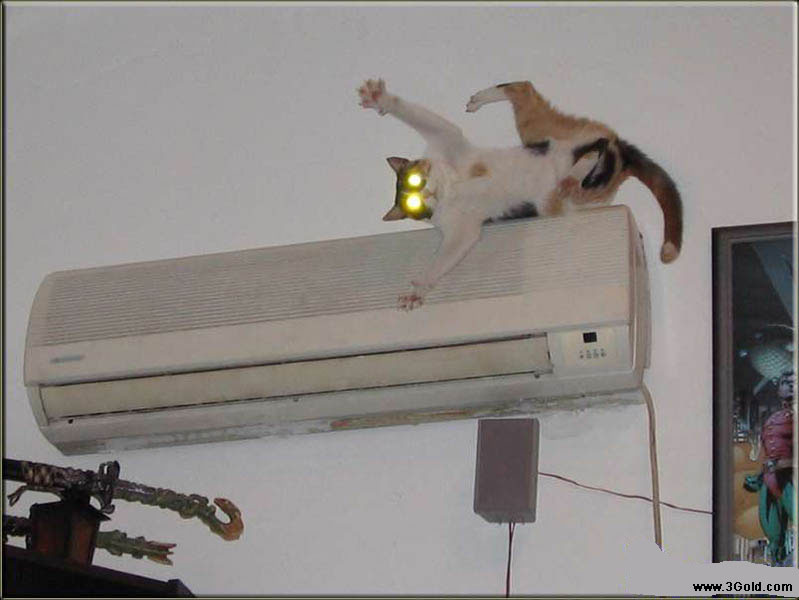 Funny Cat pictures & photos # 48
