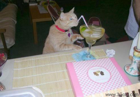 Funny Cat pictures & photos # 52