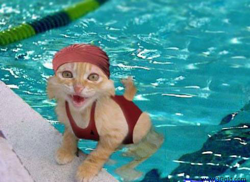 Funny Cat pictures & photos # 65