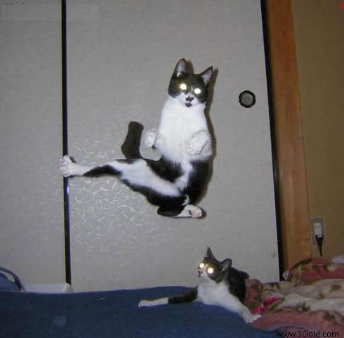 Funny Cat pictures & photos # 70