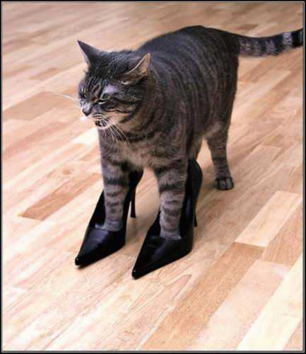 Funny Cat pictures & photos # 94