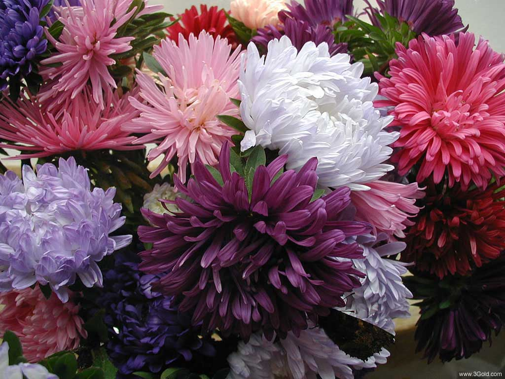 Fresh Flowers Desktop Wallpapers virtual pictures online # 10