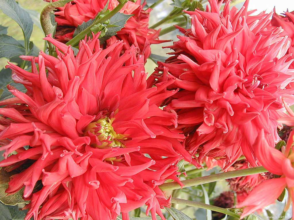 Fresh Flowers Desktop Wallpapers virtual pictures online # 12