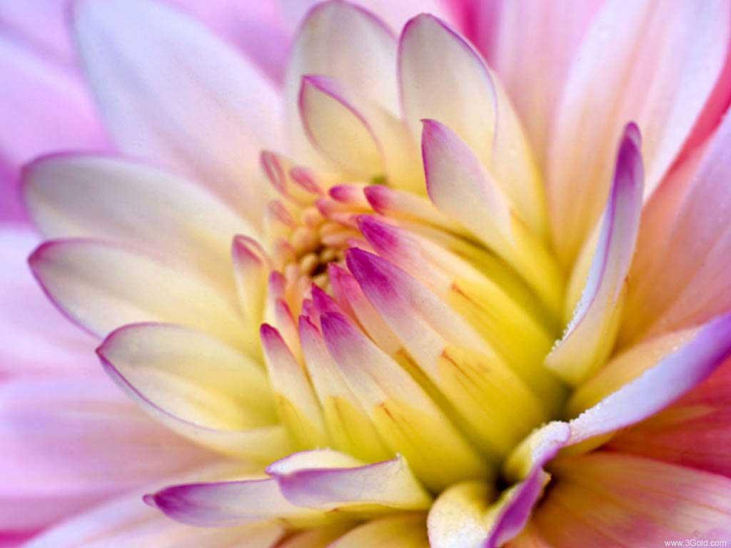 Fresh Flowers Desktop Wallpapers virtual pictures online # 18