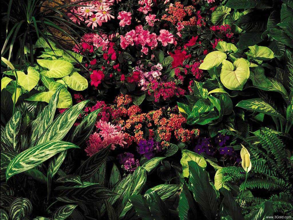 Fresh Flowers Desktop Wallpapers virtual pictures online # 21