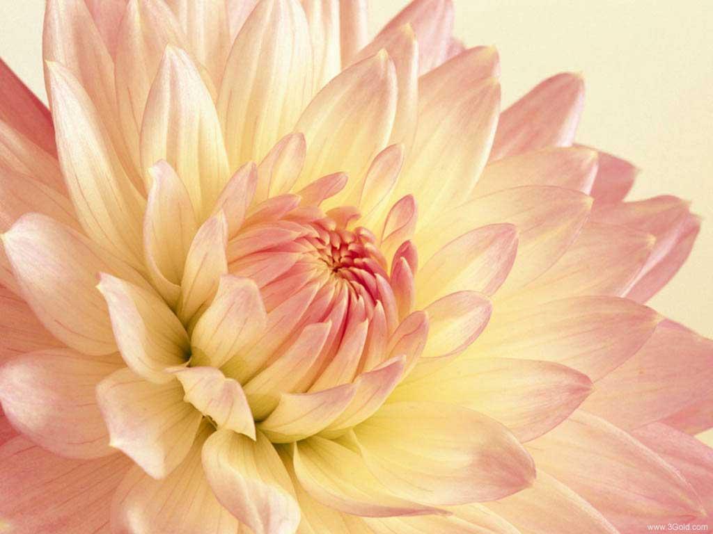 Fresh Flowers Desktop Wallpapers virtual pictures online # 27