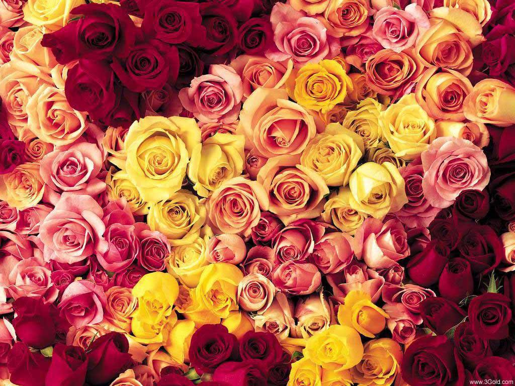 Fresh Flowers Desktop Wallpapers virtual pictures online # 29