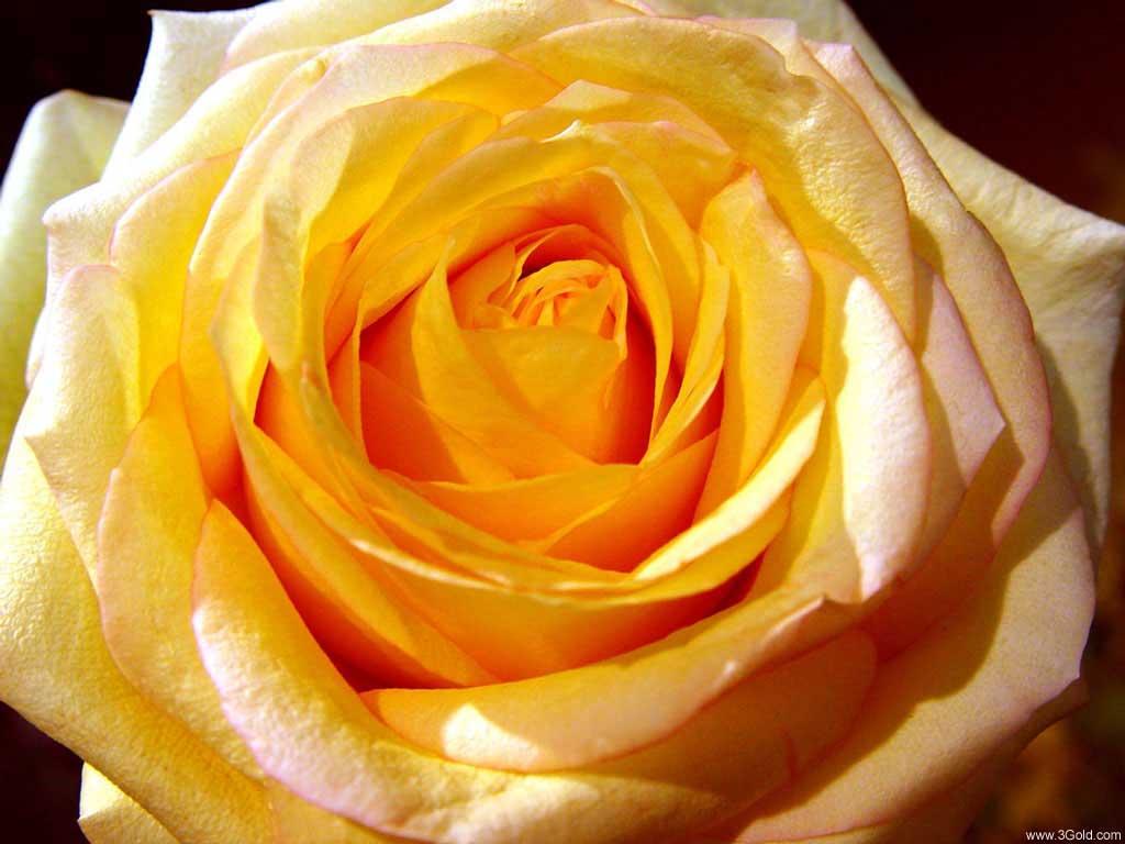 Fresh Flowers Desktop Wallpapers virtual pictures online # 32