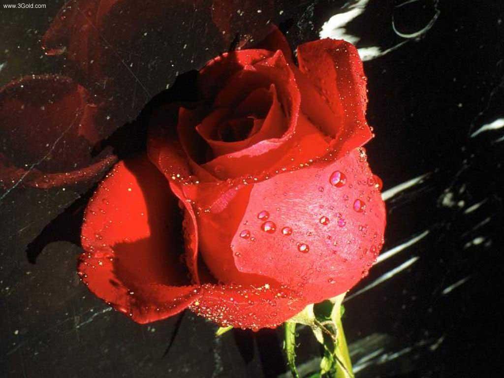 Fresh Flowers Desktop Wallpapers virtual pictures online # 39