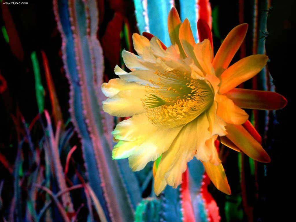 Fresh Flowers Desktop Wallpapers virtual pictures online # 40