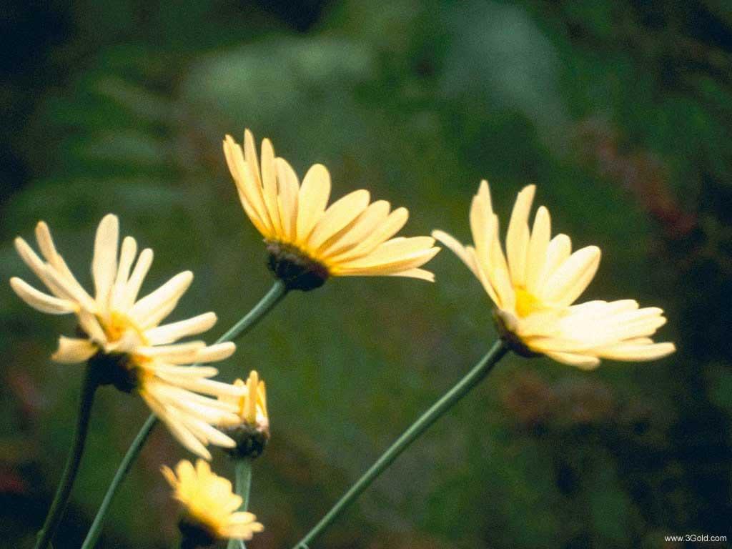 Fresh Flowers Desktop Wallpapers virtual pictures online # 43