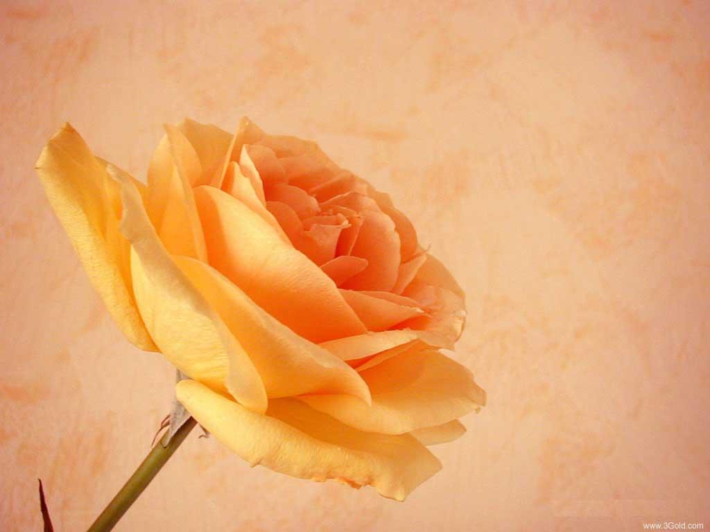 Fresh Flowers Desktop Wallpapers virtual pictures online # 48
