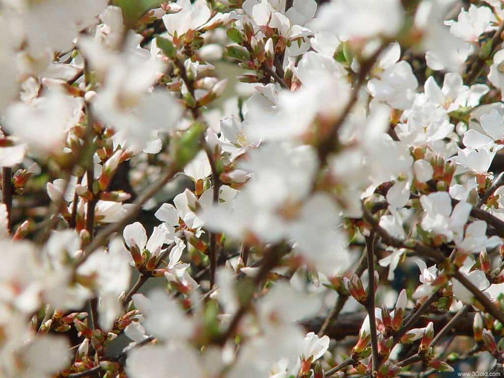 Fresh Flowers Desktop Wallpapers virtual pictures online # 55