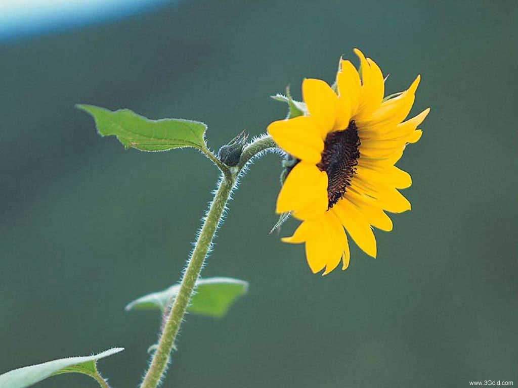 Fresh Flowers Desktop Wallpapers virtual pictures online # 57