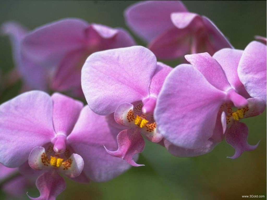 Fresh Flowers Desktop Wallpapers virtual pictures online # 60