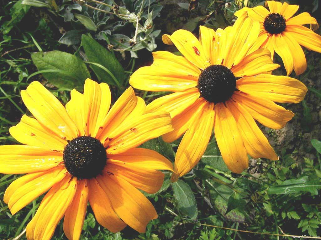 Fresh Flowers Desktop Wallpapers virtual pictures online # 7